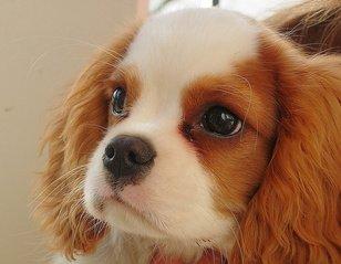 puppy-1381778